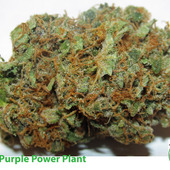 Purple Power Plant